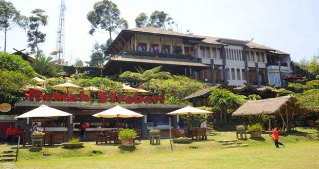 Rumah Stroberi, salah satu tempat wisata petik strawberry sendiri di Lembang (foto : liburananak.com)