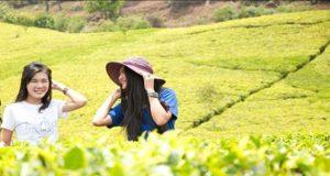 Hijau mempesona hamparan teh di Kebun Teh Rancabali (foto : detikTravel)