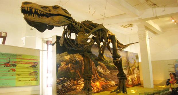 Museum Geologi, objek wisata Bandung untuk melihat fosil T-Rex (foto : liburananak.com)