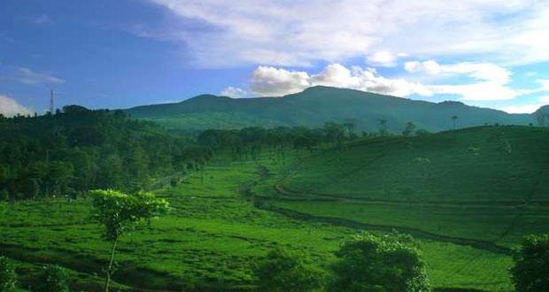 Panorama kebun teh Ciater (foto : travel.detik.com)