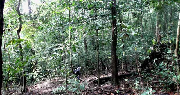 Ilustrasi hutan yang harus dilalui menuju tempat wisata Pulau Sempu Malang (foto : hamikron.wordpress.com)