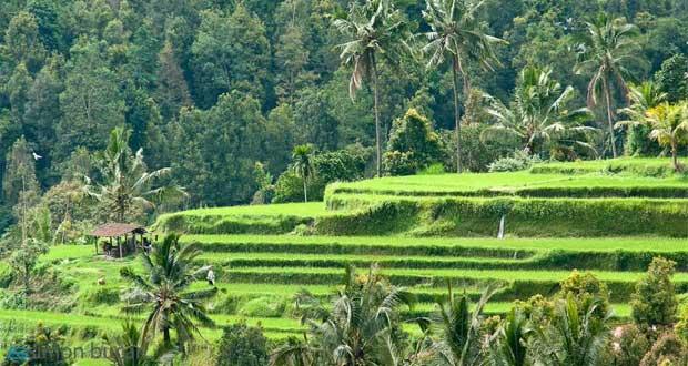 Ilustrasi pemandangan alam di Munduk, salah tempat wisata terbaik di Bali untuk menyendiri (foto : brajdo.com)