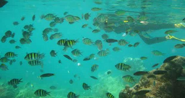 Pemandangan bawah laut di sekitar tempat wisata Pulau Pramuka (foto : pulaupramuka.com)