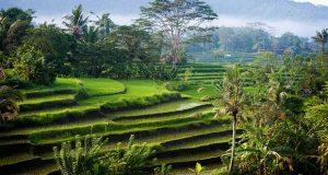 Ilustrasi pemandangan di Sidemen, salah satu tempat wisata terbaik di Bali untuk menyendiri (foto : flickr.com)