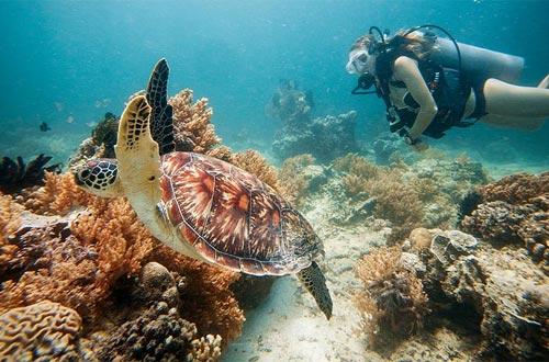Ilustrasi diving di Gili Trawangan Lombok (foto : tommyschultz.com)