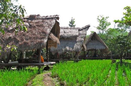 Ilustrasi suasana alam persawahan di Sapu Lidi Bandung (foto : pergidulu.com)
