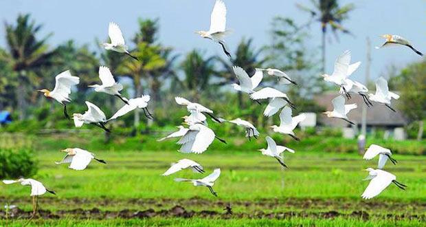 Desa Wisata Ketingan adalah salah satu tempat wisata alam di Jogja yang wajib dikunjungi (Foto : swaragamafm.com)