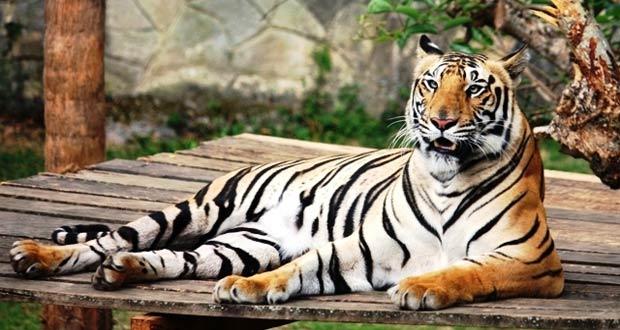 Jatim Park II adalah salah satu tempat wisata di Malang dan Batu untuk long weekend (Foto : mujursurya.com)