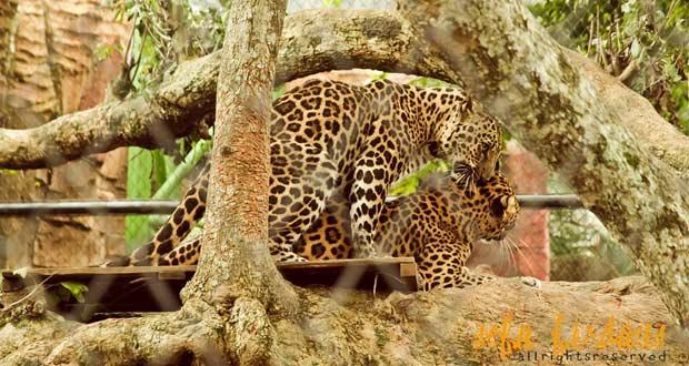 Jawa Timur Park 2 dengan Batu Secret Zoo nya adalah salah satu tempat wisata di Malang favorit wisatawan (Foto : negeridongeng.com)