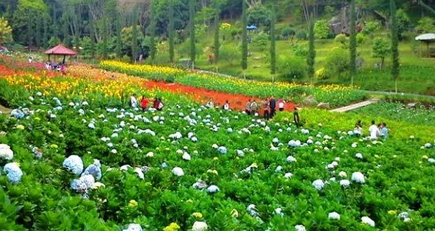 Selecta adalah salah satu tempat wisata di Malang dan sekitarnya yang menawarkan taman bunga yang indah mempesona (Foto : qaholiday.com)