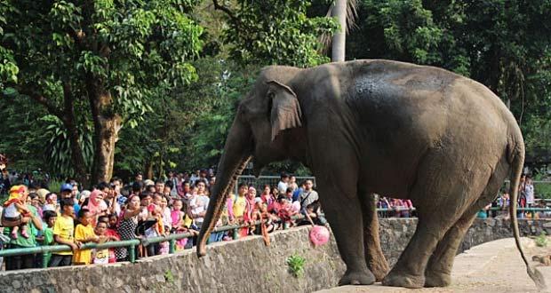 Kebun Binatang Ragunan adalah salah satu tempat wisata di Jakarta yang asyik dan menarik untuk mengisi libur lebaran (Foto : webtempatwisata.com)