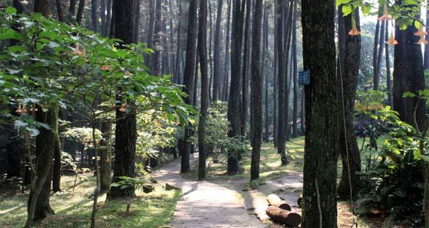 Tempat wisata di Bandung Taman Hutan Raya IR H Juanda (Foto : bandoenglover.wordpress.com)
