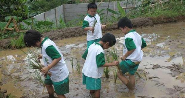Wisata Edukasi Tanam Padi Di Cibalung Happy Land