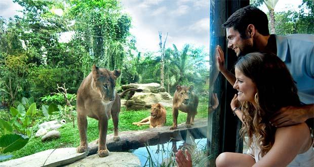 Kebun Binatang Bali / Bali Zoo