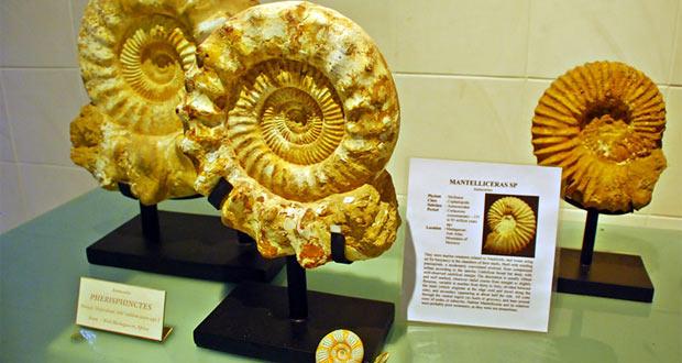 Koleksi Bali Shell Museum