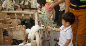 Tempat-Wisata-Anak-Di-Bandung