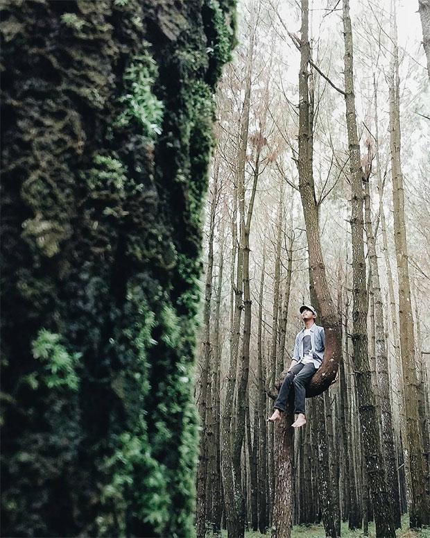 Hutan Pinus Kanyon