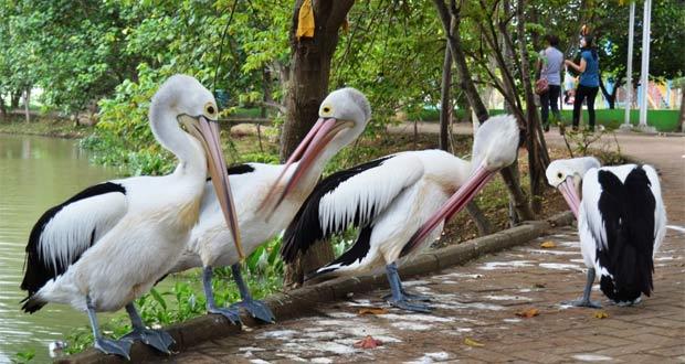 Kebun Binatang Semarang
