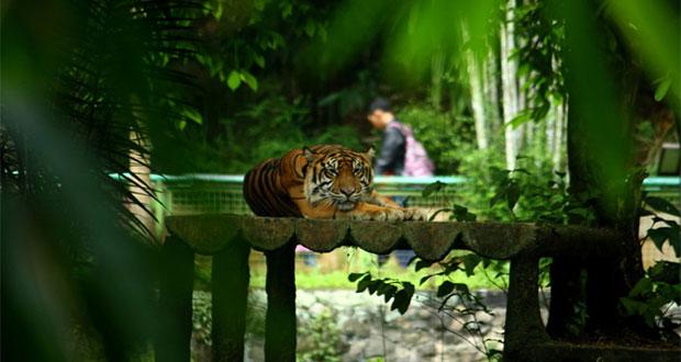 Taman Satwa Cikembulan